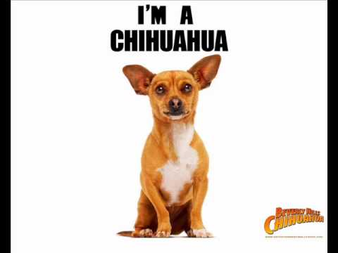beverly hills chihuahua song