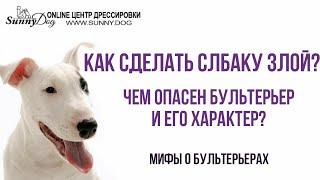 Чем и насколько опасен бультерьер и его характер? Как сделать собаку злой? Мифы о бультерьерах