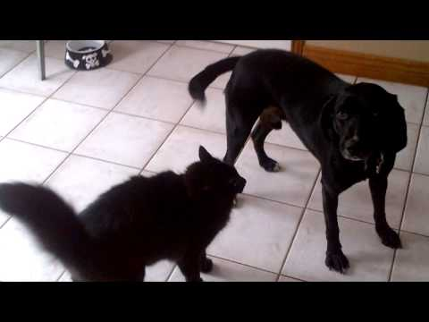 MIXEY VS BUDDY PLAY FIGHT CAT VS DOG ROUND # 2.