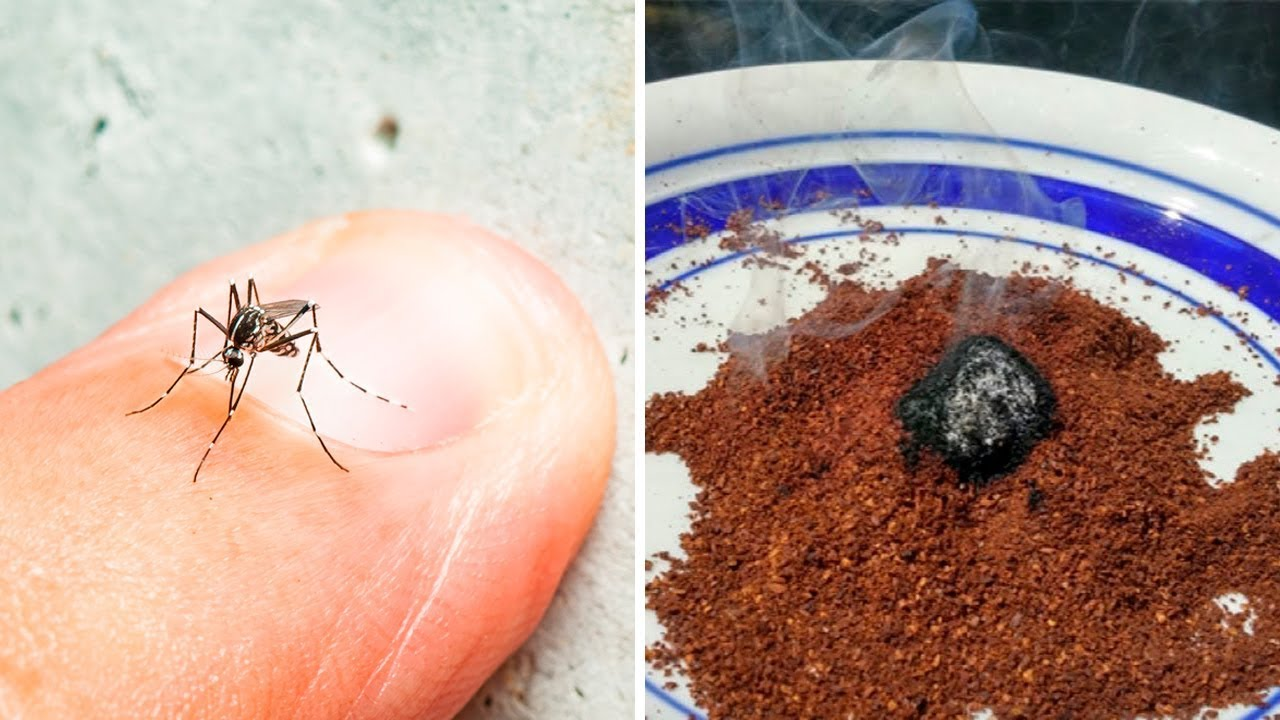 The One Natural Mosquito Repellent That Really Works