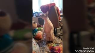 Любимый котик Руди)) Видео для поднятия настроения))
