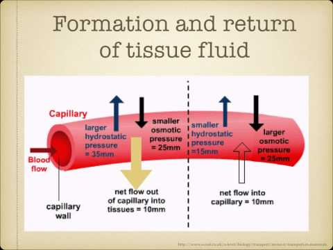 AS Level. G.3  Tissue Fluid And Lymph Ms Cooper
