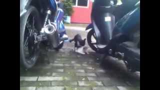 kucing ngentot @parkiran smk puruhita sby