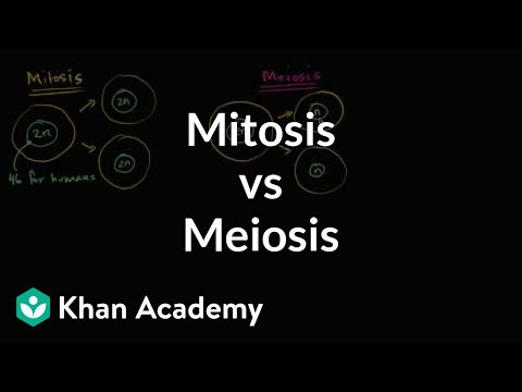 Comparing mitosis and meiosis | Cells | MCAT | Khan Academy