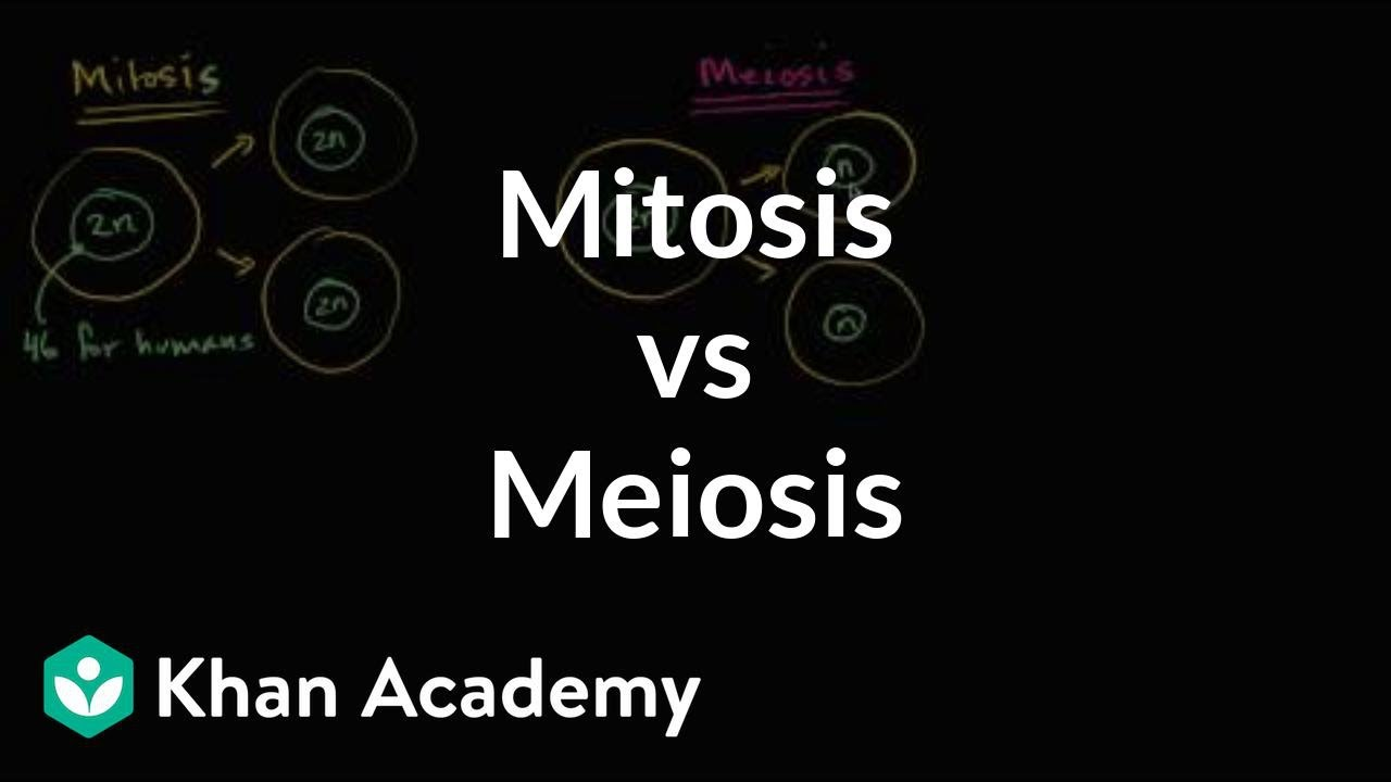 Map concept of comparing mitosis and meiosis free wallpaper for and meiosis venn diagram haci comparing compare and contrast the phases of mitosis and meiosis with this compare and contrast the phases of mitosis and ccuart Gallery