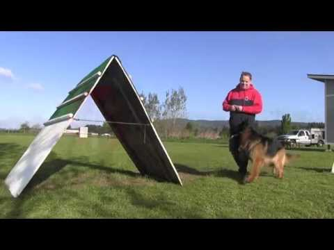wayne-curry-and-aragon-showing-how-german-shepherd-obedience-should-be-done
