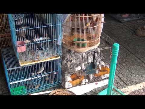 Chợ bán chim, chó, mèo ở Sài Gòn-by Pham Khanh 2012