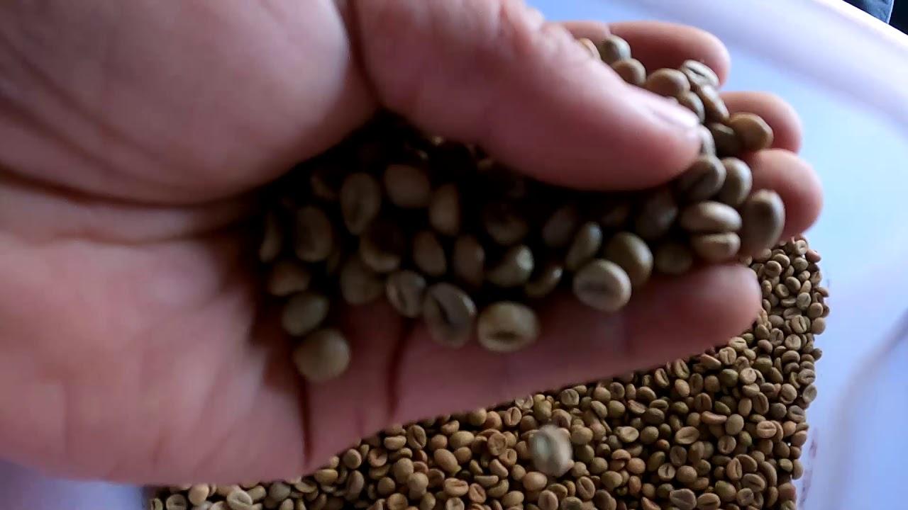Thử rang cà phê ROBUSTA đầu vụ và cái kết