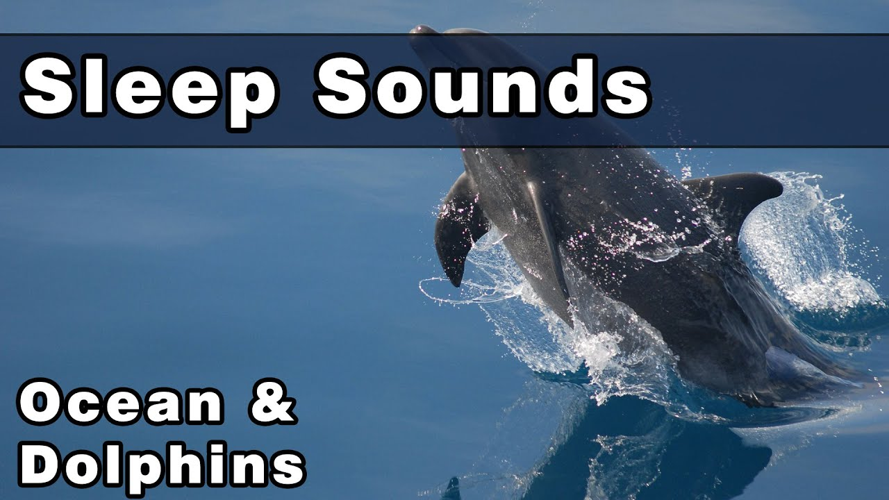 Soothing OCEAN SOUNDS with DOLPHIN Noises, 10 Hours ...