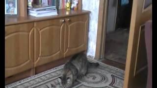 видео Авитаминоз у кошек: симптомы и лечение