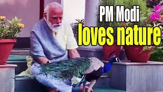 PM Narendra Modi posts pics of his morning walk tryst with peacocks at 7, LKM | NTV