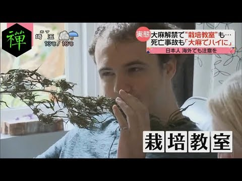 Nippon TV Cannabis Interview 10-12-18