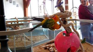 Birds Fighting at a Pet Shop in West Lebanon, NH