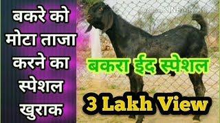 बकरे को मोटा ताजा करने का स्पेशल खुराक ll Homemade Goat and sheep weight gain Feed (Eid Special)