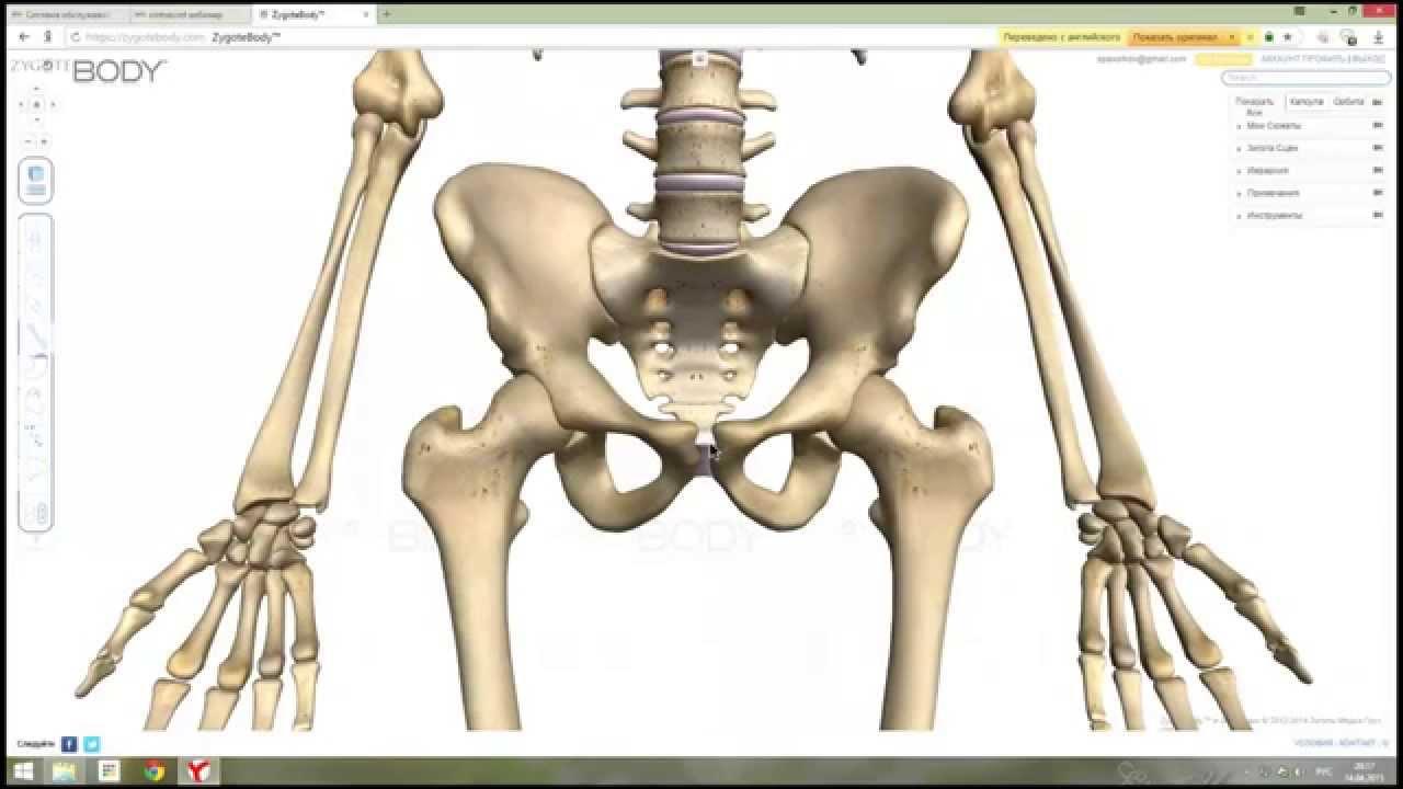 Анатомия суставы видео уроки при гепатите с болят суставы