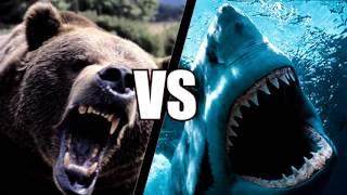Медведь против акулы