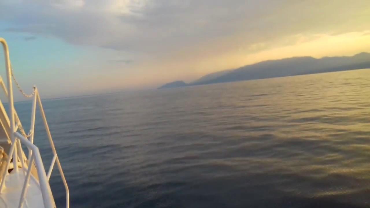 Дельфины в Чёрном море - YouTube