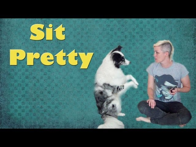 Teach your dog the trick to Sit Pretty