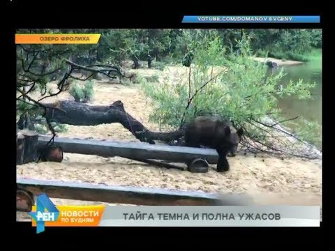 Медведь задрал охотника
