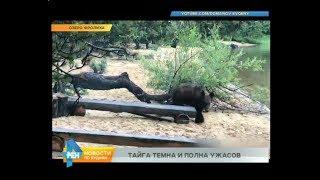 Медведь задрал охотника в Усть-Кутском районе
