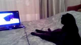 Кошка сидит на попе