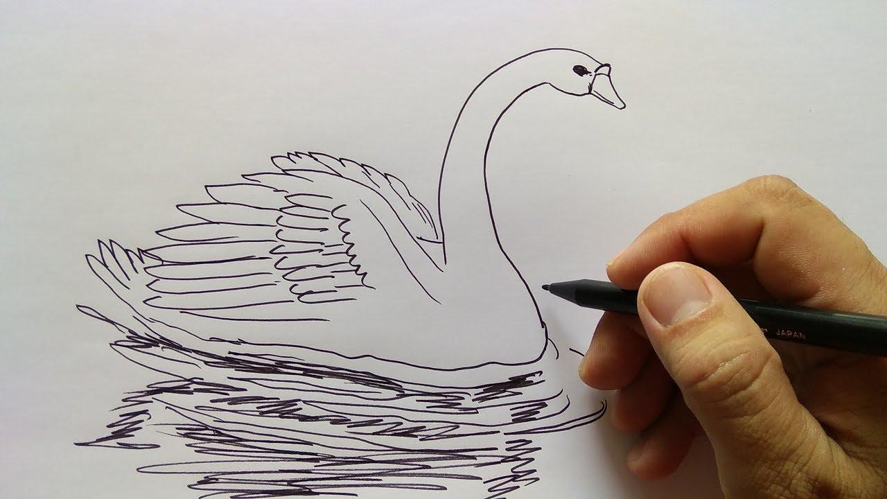 Cara Menggambar Angsa