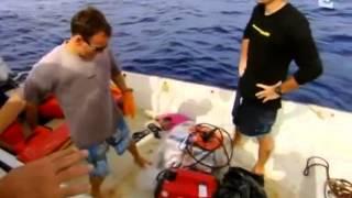 Quand les requins attaquent - Documentaire