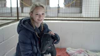 Inside Greyhound Racing: Life at a Racing Kennels
