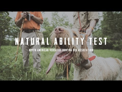 NAVHDA Natural Ability Test - An Inside Look