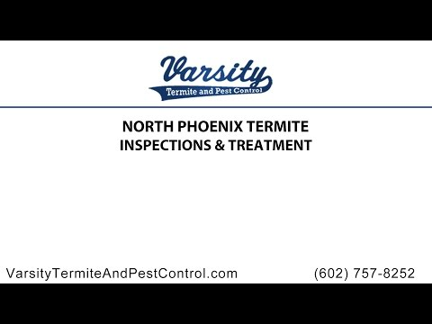 North Phoenix Termite Inspections and Treatment By Varsity