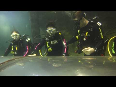 Shark Dive Xtreme at Oceanworld Manly (Sydney)