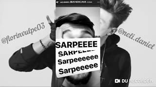 NELI- Sarpe