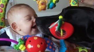 Les plus drôles Chiens et bébés Vidéos - Animaux Mignon Compilation