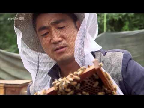 Les ruches en Chine