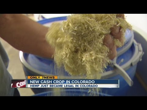 First large-scale hemp plant starts in Colorado