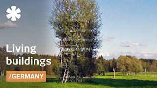 Baubotanik shapes living tree branches into building facades