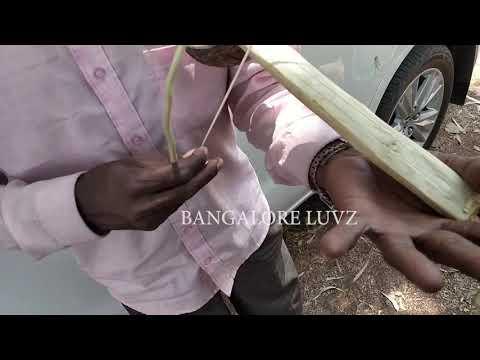 Magic Babu Mysore teaching simple technic of playing music