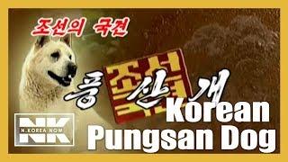 North Korea's The Best Hound Dog ' Pungsan Dog'