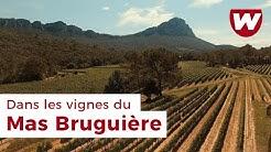 Dans les vignes du Mas Bruguière (Pic Saint-Loup, Languedoc)