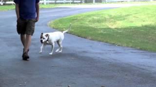 Alpha Dog Training Ga - Chloe