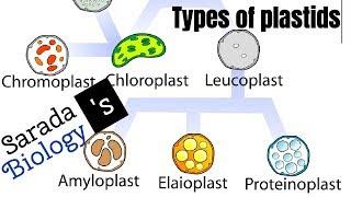 Types of plastids/ basics of biology/ CSIR NET LS JRF/ SARADA'S BIOLOGY