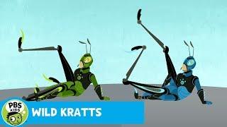 WILD KRATTS | Grasshopper Powers! | PBS KIDS