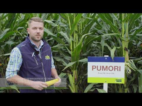 Mais PUMORI, Vertriebsberater Florian Ruß