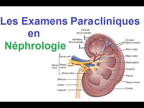Les Examens Biologiques et radiologiques en Néphrologie
