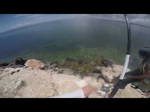 Barracuda Fishing In Cuba Cayo Coco 2016