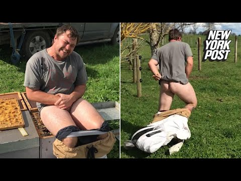 Idiot puts bare ass on bees for money | New York Post