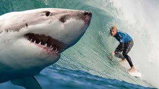 WATCH: Pro Surfer Survives SHARK ATTACK!