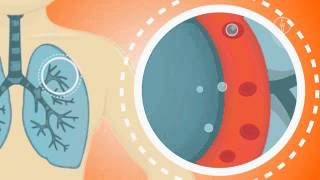 FWU - Mein Körper: Atmung, Puls, Verdauung - Trailer