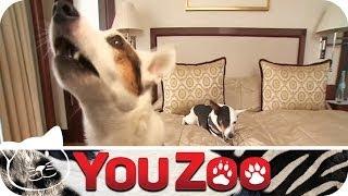 Hundehotel im Test I Urlaub für den Hund I Hundeurlaub