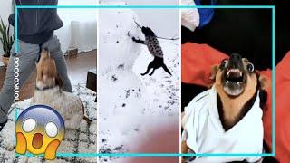Dog's funny moments of 2021 || Monkoodog